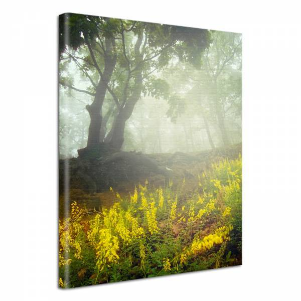 Leinwand Bild edel Blumen im Wald & Nebel
