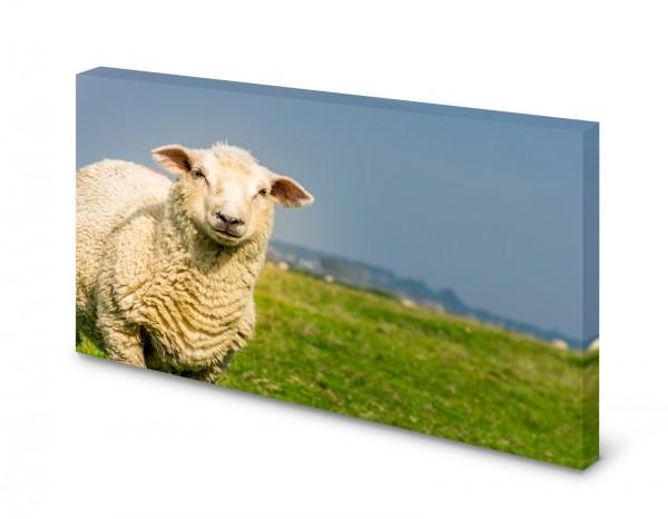 Magnettafel Pinnwand Bild Natur Schaf Wiese Weide gekantet