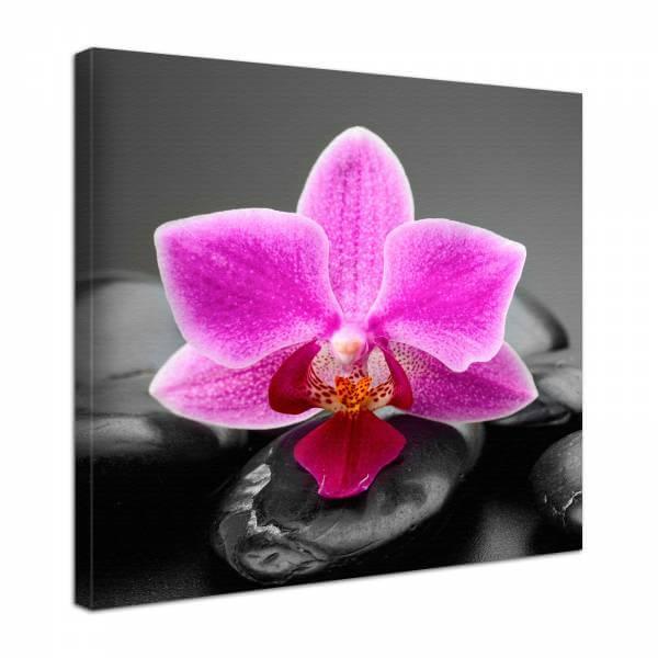 Leinwand Bild edel Blumen Orchidee Blüte