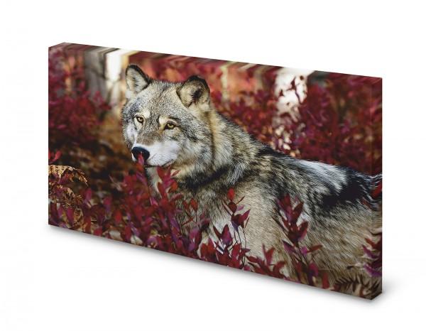 Magnettafel Pinnwand Bild Wolf Natur XXL gekantet