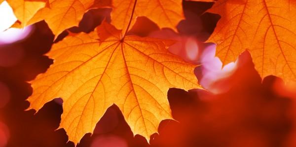 Magnettafel Pinnwand Bild XXL Panorama Laub Herbst Herbstlaub