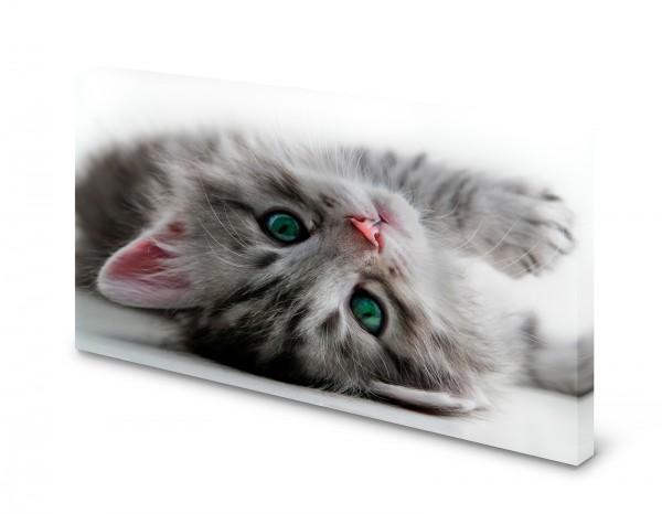 Magnettafel Pinnwand Bild Katze Katzenbaby Kitten XXL gekantet