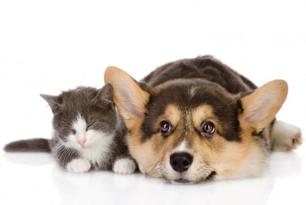 Magnettafel Pinnwand XXL Bild Hund Katze Baby