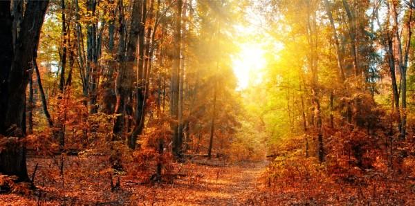 Magnettafel Pinnwand XXL Magnetbild Wald Herbst Lichtung