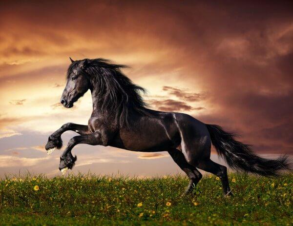 XXL Poster Fototapete Tapete Vlies Pferd in der Wildnis 2