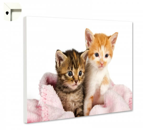 Magnettafel Pinnwand Memoboard Motiv Tiere Katzen Pärchen