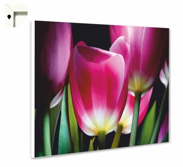 Magnettafel Pinnwand Natur Blumen Tulpen in pink & schwarz