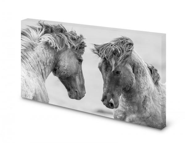 Magnettafel Pinnwand Bild Pferd Pferde Isländer XXL gekantet