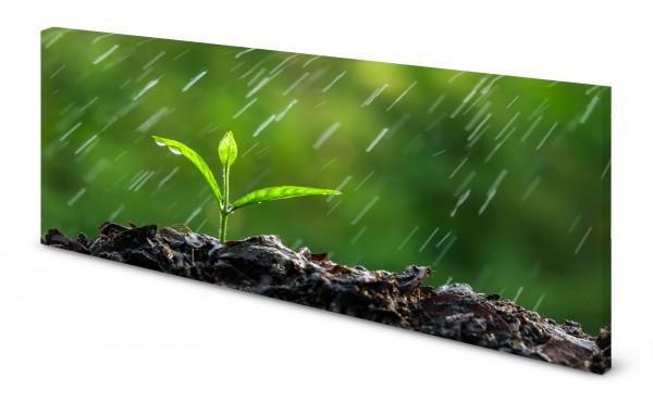 Magnettafel Pinnwand Bild Natur Keimling Regen Erde Garten gekantet