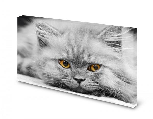 Magnettafel Pinnwand Bild Katze Perser Perserkatze XXL gekantet