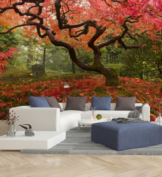Vliestapete Poster Fototapete Natur Japanischer Ahorn im Herbst