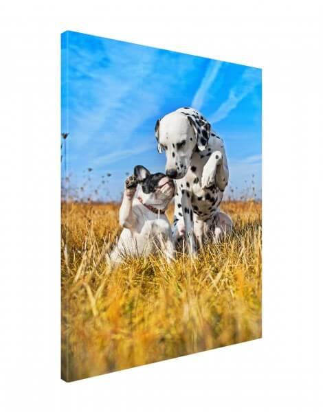 Leinwand Bild edel Tiere Hund Bulldogge & Dalmatiner zwei Freunde