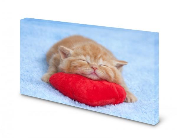 Magnettafel Pinnwand Bild Babykatze Katze Herz XXL gekantet