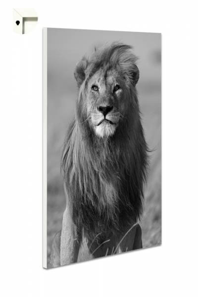 Magnettafel Pinnwand Tiere Löwe