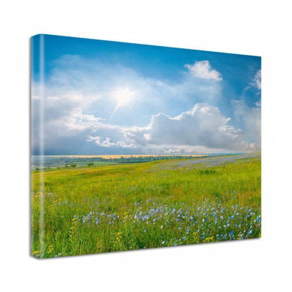 Leinwand Bild Natur & Blumen Sommer Landschaft