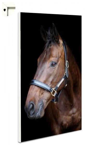 Magnettafel Pinnwand Pferd Braun