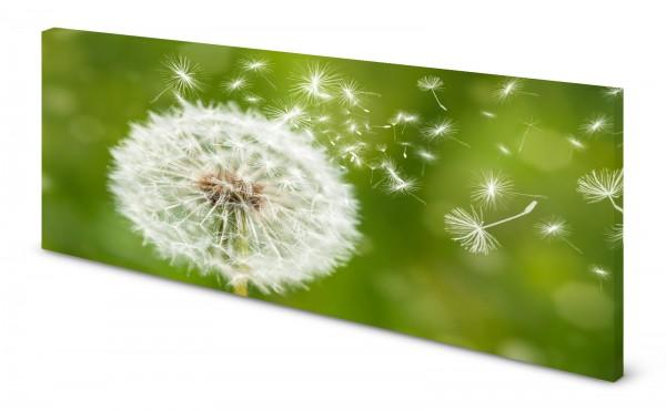 Magnettafel Pinnwand Bild Natur Pusteblume Löwenzahn gekantet