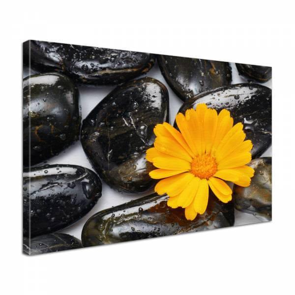 Leinwandbild Bild Wandbild Natur & Blumen schwarze Steine und Blume