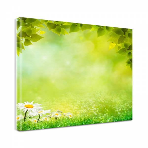 Leinwand Bild Natur & Blumen Gänseblümchen Wiese
