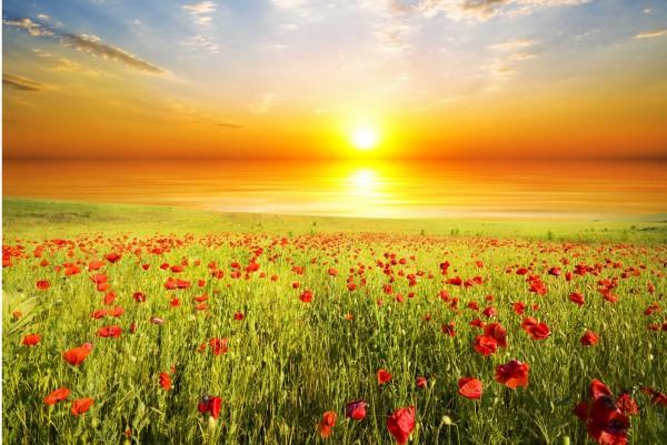 Magnettafel Pinnwand XXL Bild Mohnblumen Feld Sonnenaufgang