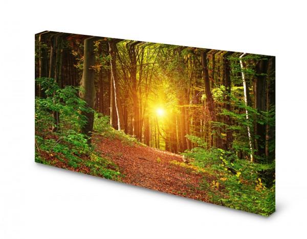 Magnettafel Pinnwand Bild Natur Wald Sonne Bäume Lichtung gekantet