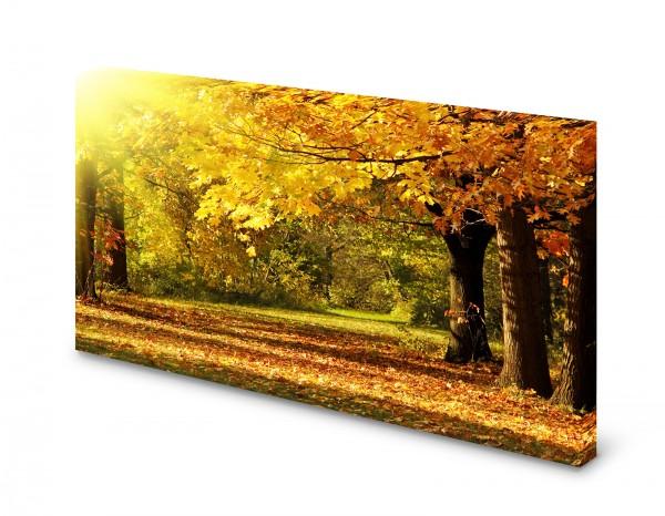 Magnettafel Pinnwand Bild Wald Herbst Blätter bunt Natur gekantet