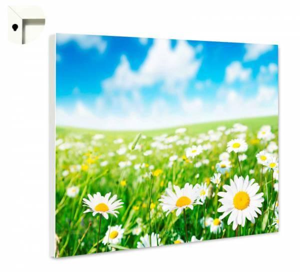 Magnettafel Pinnwand Natur Blumen Wiese Gänseblümchen 2