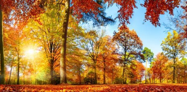 Magnettafel Pinnwand Bild Panorama Lichtung Wald Herbst bunt