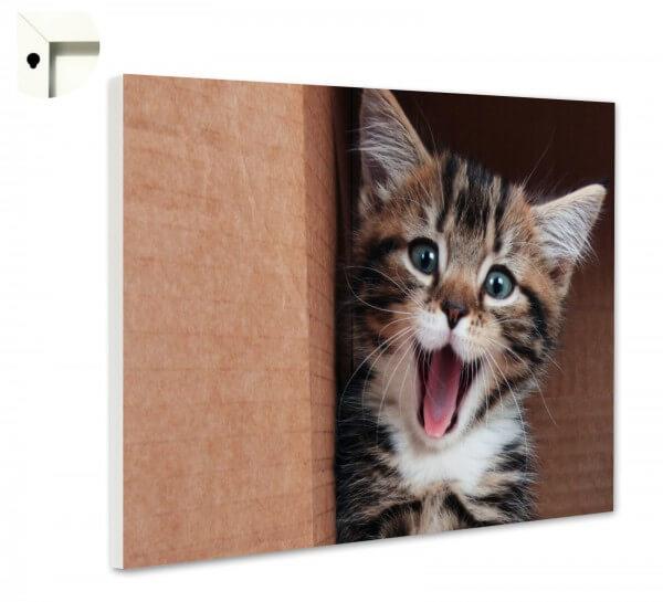 Magnettafel Pinnwand Memoboard Motiv Tiere Kleine Katze