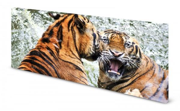 Magnettafel Pinnwand Bild Panorama Tiger gekantet