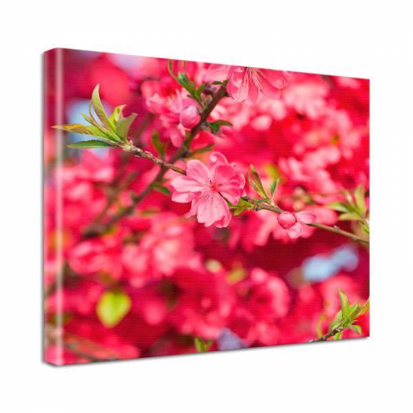 Leinwand Bild Natur & Blumen Blüten Zweig in pink