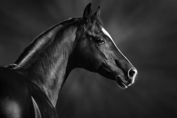 Magnettafel Pinnwand XXL Bild Fohlen Pferd