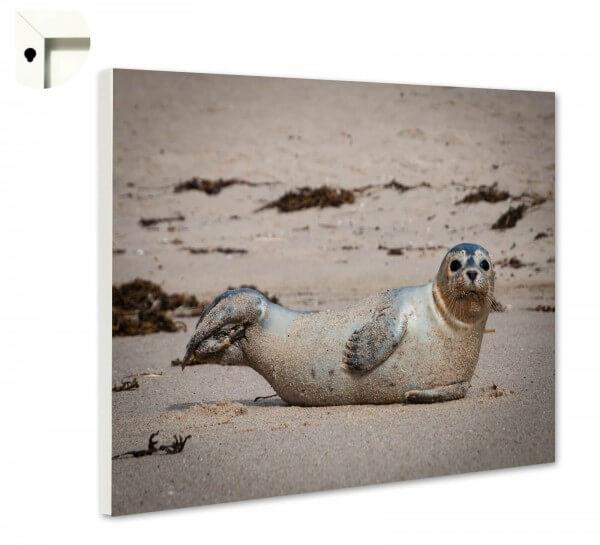 Magnettafel Pinnwand Natur Sylt Seehund Strand