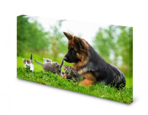 Magnettafel Pinnwand Bild Schäferhund Katze gekantet