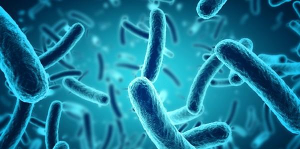 Magnettafel Pinnwand Bild XXL Panorama Bakterien Muster blau