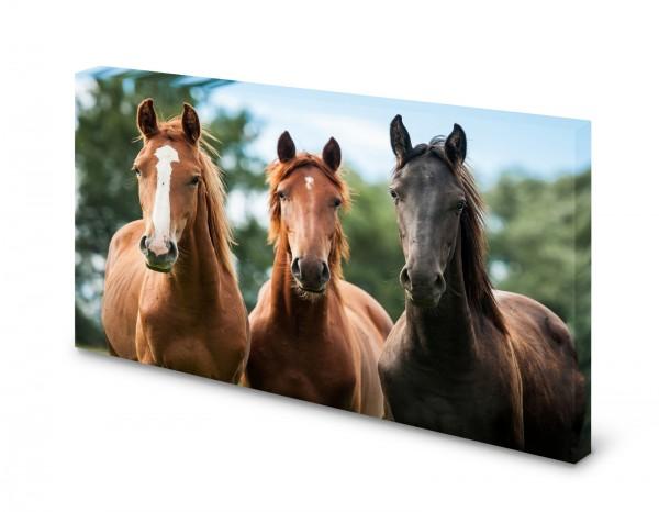 Magnettafel Pinnwand Bild Pferde Pferd gekantet