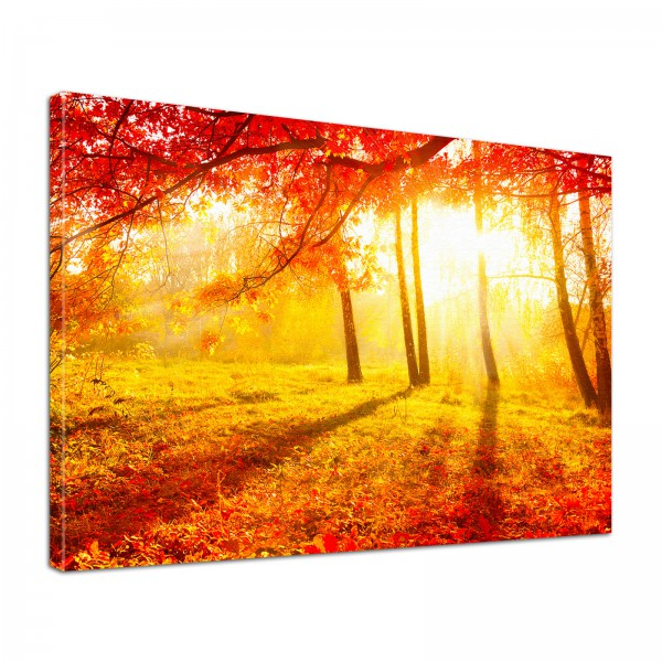 Leinwand Bild edel Natur Indian Summer