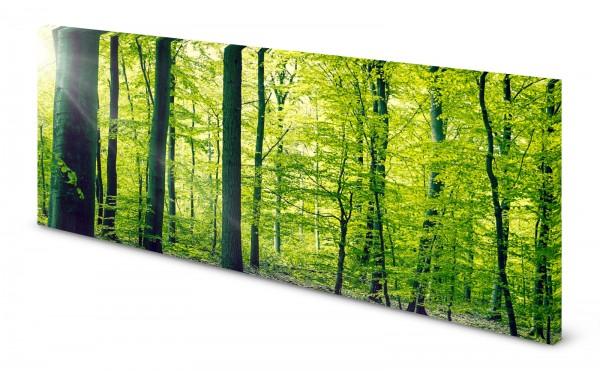 Magnettafel Pinnwand Bild wald Bäume Blätter gekantet