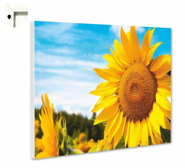 Magnettafel Pinnwand Natur Blumen Sonnenblume