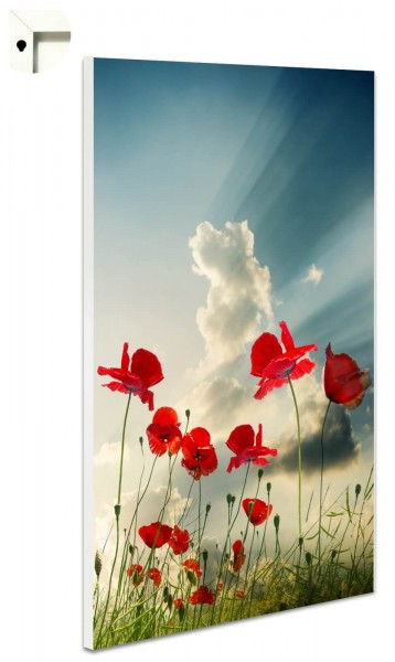 Magnettafel Pinnwand Natur Mohnblume Himmel