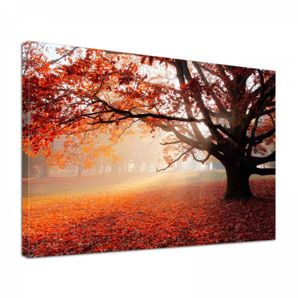 Leinwand Bild edel Natur Eiche im Herbst
