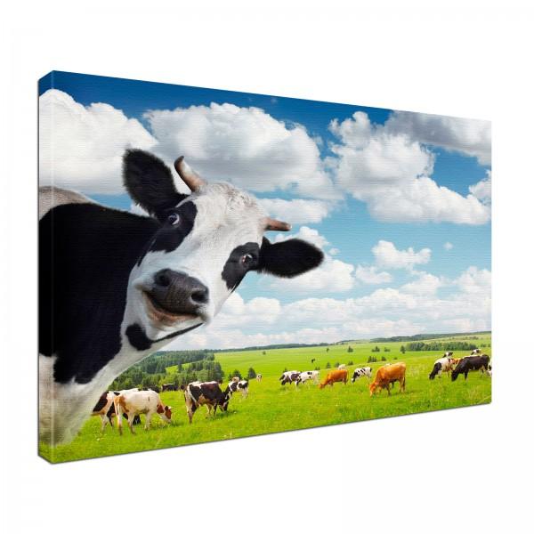 Leinwand Bild edel Tiere Kuh