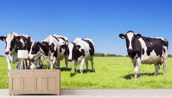 Vlies Tapete Fototapete Panorama Kuh Herde Rind Holsteiner