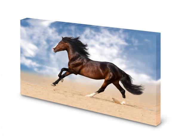 Magnettafel Pinnwand Bild Pferd Brauner Galopp Wüste gekantet