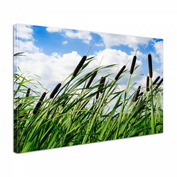 Leinwandbild Bild Wandbild Natur & Blumen Schilf im Wind berührt Sommerhimmel