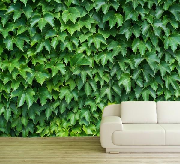 Vlies Tapete Fototapete Muster Weinlaub Mauer Weinranke grün