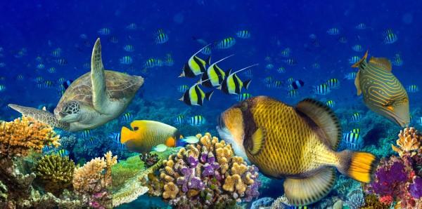 Magnettafel Pinnwand Bild XXL Panorama Korallenriff Tropen