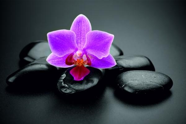 Magnettafel Pinnwand XXL Bild Steine schwarz Orchidee Zen rosa