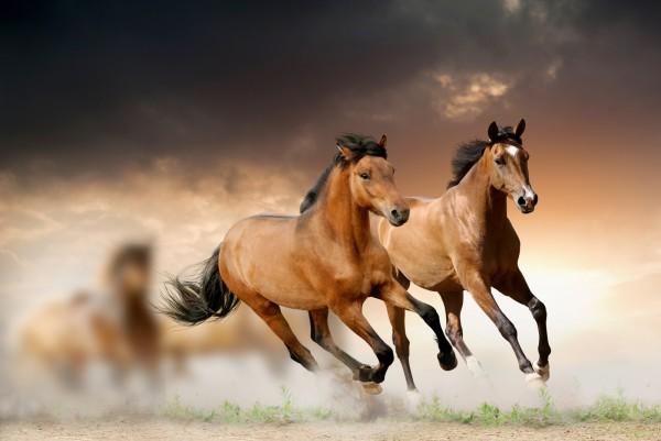 Magnettafel Pinnwand XXL Bild Pferd Pferdeherde Brauner