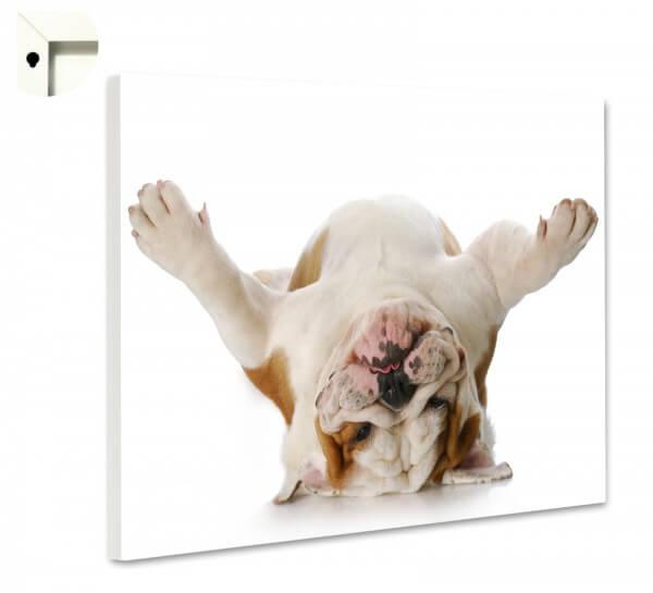 Magnettafel Pinnwand Memoboard Motiv Tiere Hund Bulldogge tiefenentspannt